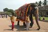Тур в Южную Индию. Штаты Тамил-Наду и Керала