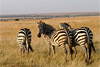 Тур в Кению. Национальные парки Кении и Танзании и остров Занзибар