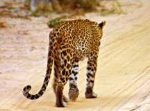 Шри Ланка: Открытие национального парка «Вилпатту»