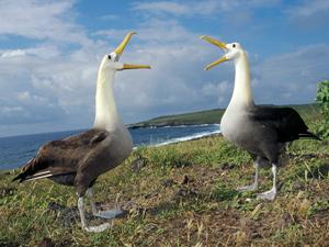 Галапагосские острова. Тур в Эквадор. Майские праздники