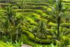 Путешествие на Бали. Индонезия