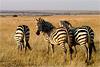 Тур в Кению, Уганду и Танзанию на майские праздники