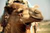 Тур в Марокко. Новогоднее восхождение на Тубкаль