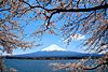 Тур в Японию: Весеннее пробуждение.