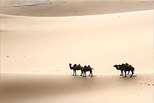 Тур в пустыню гоби