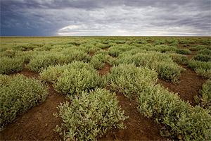 Путешествие в пустыню Гоби. Тур в Монголию