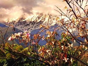 Йога тур в Гималаи