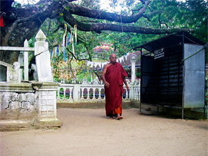Тур в Шри-Ланку
