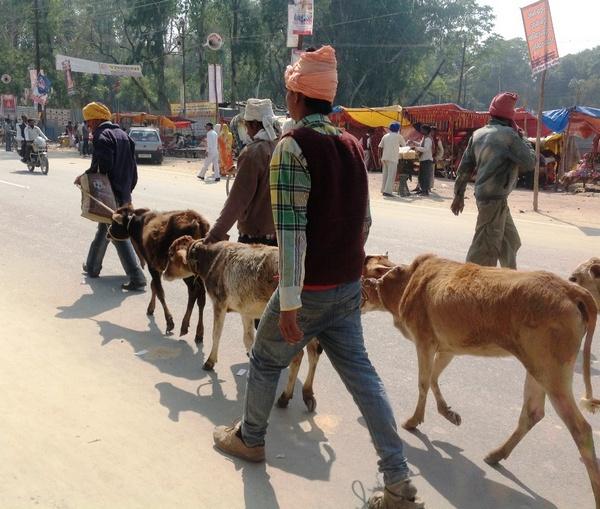 Индия. Кумбха мела