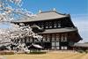 Тур в Японию на цветение сакуры