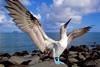 Тур в Перу и на Галапагосские острова