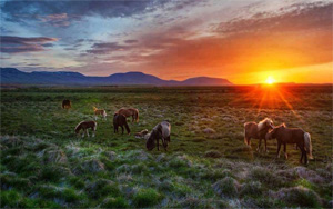Тур в Монголию на майские праздники