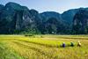 Новогодний тур во Вьетнам: Ниньбинь и Хюэ