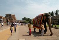 Тур в Южную Индию. Тамил-Наду и Керала