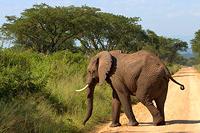 Тур в Кению и Танзанию