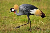 Новогодний тур в Уганду