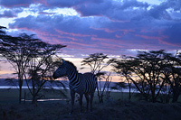 Активный тур в Кению, Танзанию и Уганду