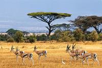 Активный тур в Намибию и Ботсвану